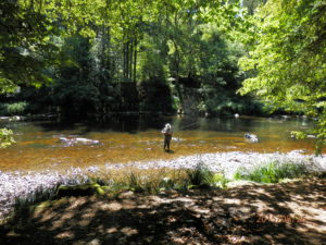 Fly Fishing River Ilz